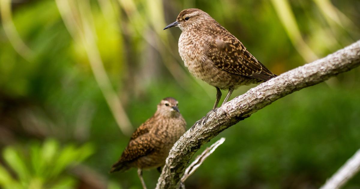 island-conservation-invasive-species-preventing-extinctions-gbird-open-letter-cbd-cop14