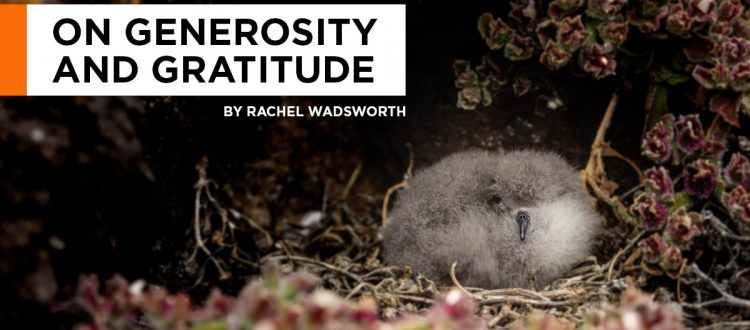 island-conservation-invasive-species-preventing-extinctions-giving-tuesday-generosity-gratitude-rachel-wadsworth-facebook