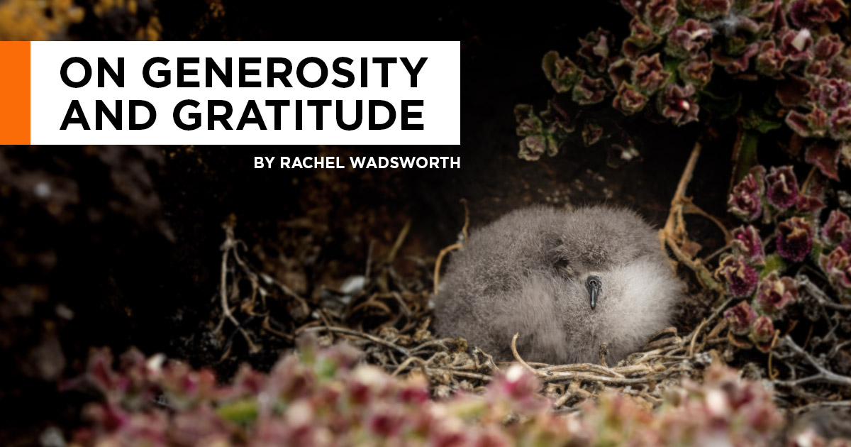island-conservation-invasive-species-preventing-extinctions-giving-tuesday-generosity-gratitude-rachel-wadsworth-facebook