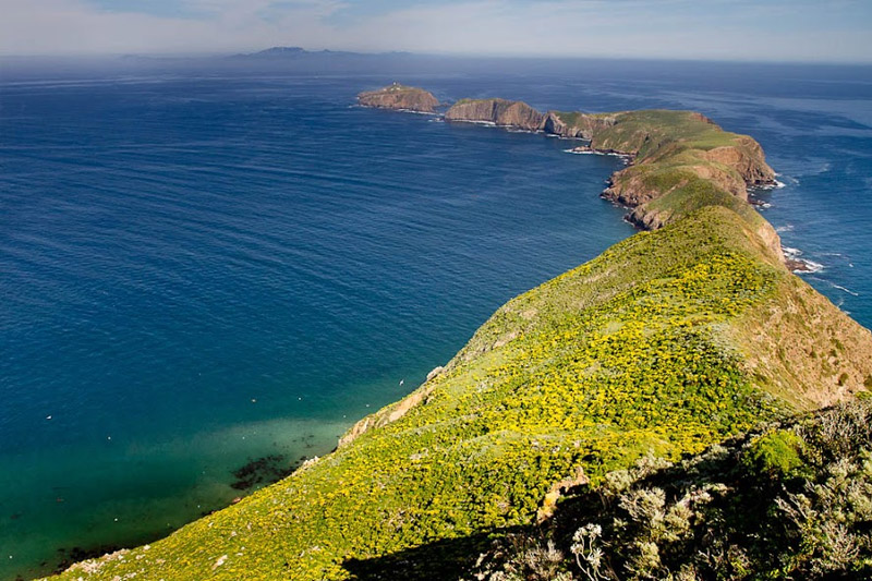 Anacapa Island Success