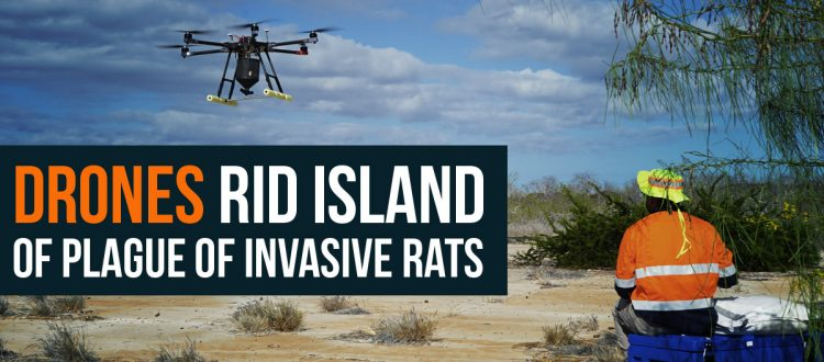 Island Conservation galapagos national park invasive species drone