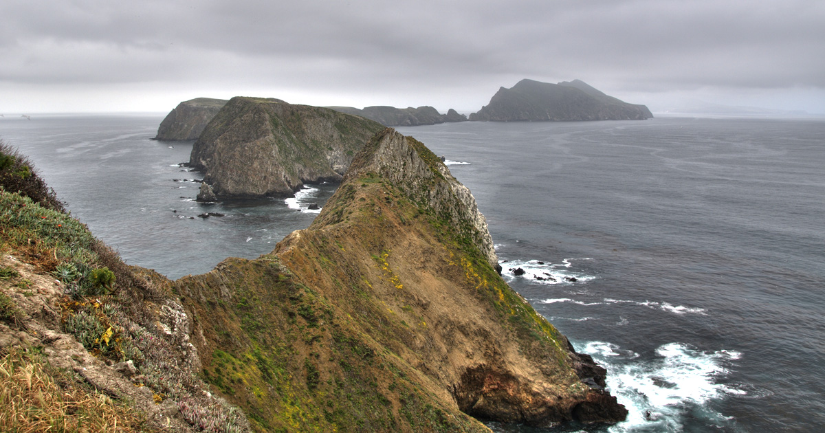 island-conservation-invasive-species-preventing-extinctions-anacapa-island
