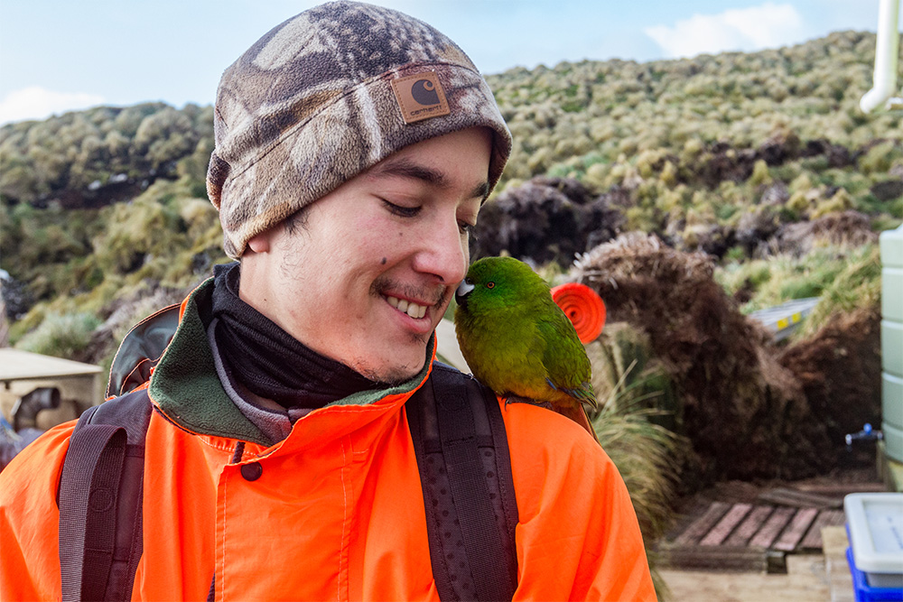island-conservation-preventing-extinctions-auckland-island-antipodes-parakeet