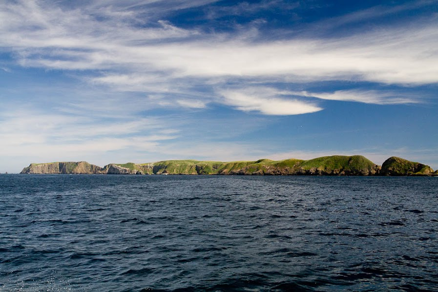 island-conservation-invasive-species-preventing-extinctions-anacapa-island-landscape-seascape