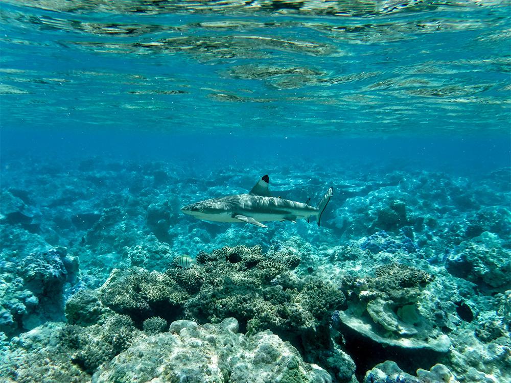 island-conservation-invasive-species-preventing-extinctions-palmyra-coral-reef-marine-health