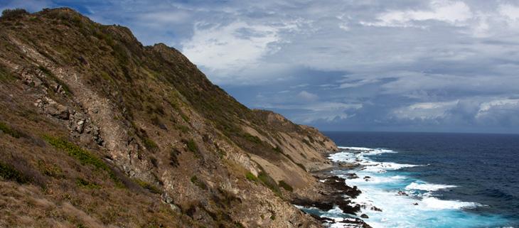 island-conservation-preventing-extinction-invasive-species-desecheo-island-landscape-feat
