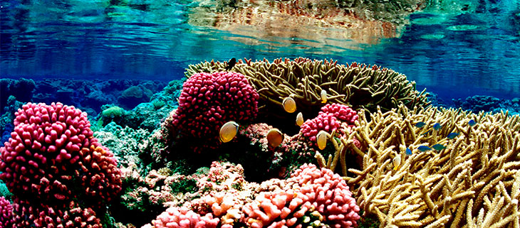 island-conservation-invasice-species-preventing-extinctions-namen-island-coral-reef-feat