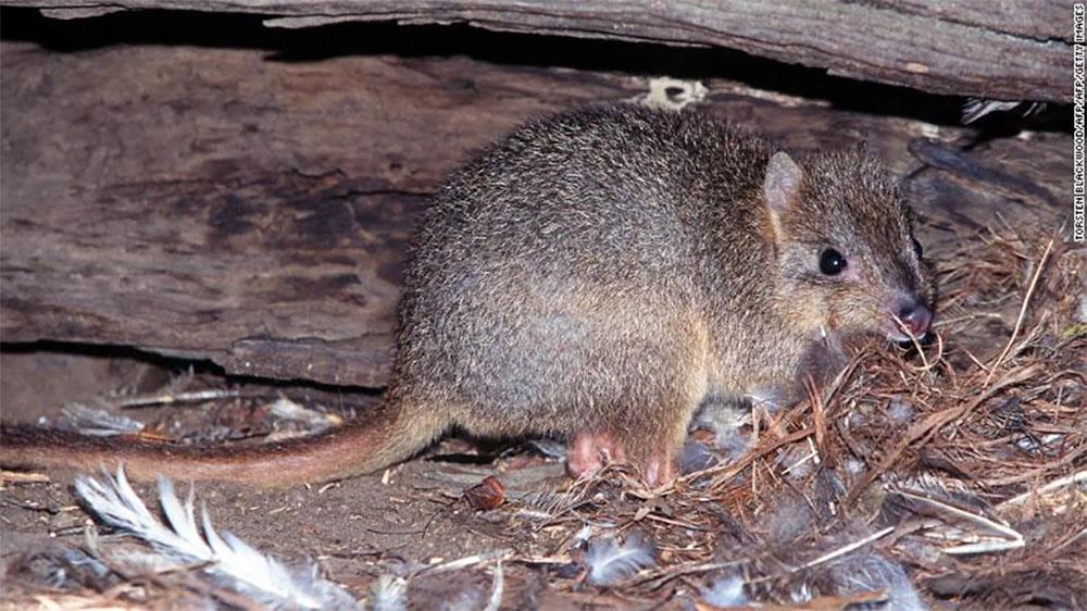 australia-wildlife