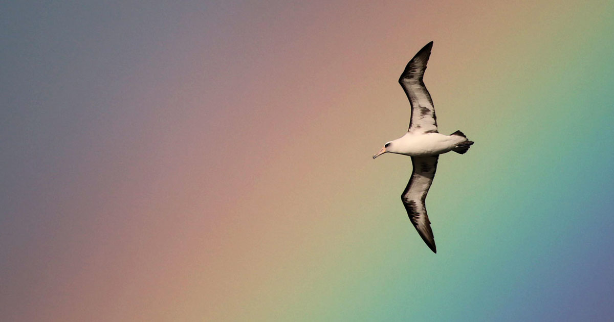 Island-conservation-midway-atoll-campaign-rainbow
