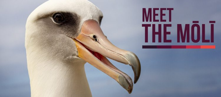 island-conservation-invasive-species-laysan-albatross-midway-albatross-campaign-fb