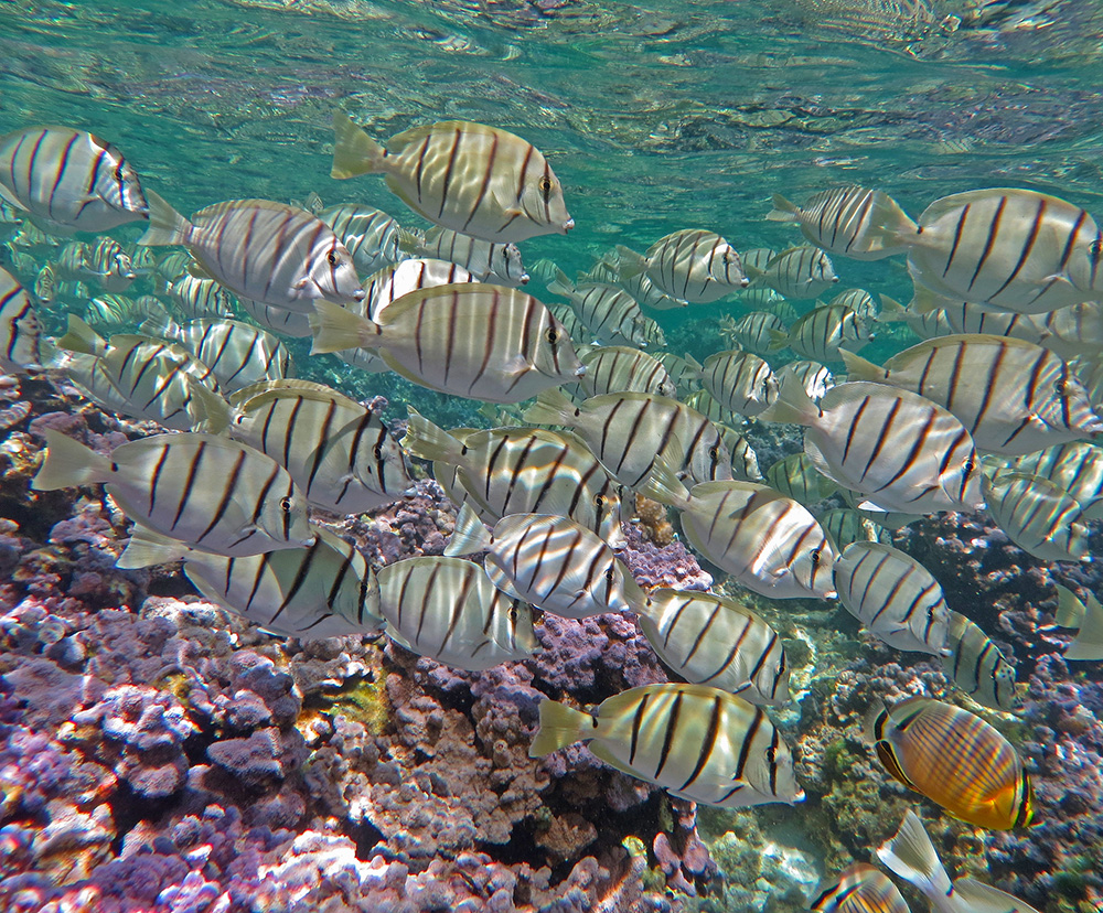 island-conservation-invasive-species-midway-atoll-coral-reef-fish