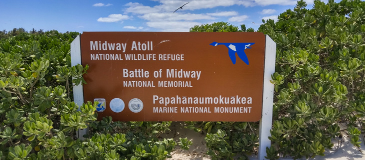 island-conservation-invasive-species-midway-atoll-national-wildlife-refuge-feat