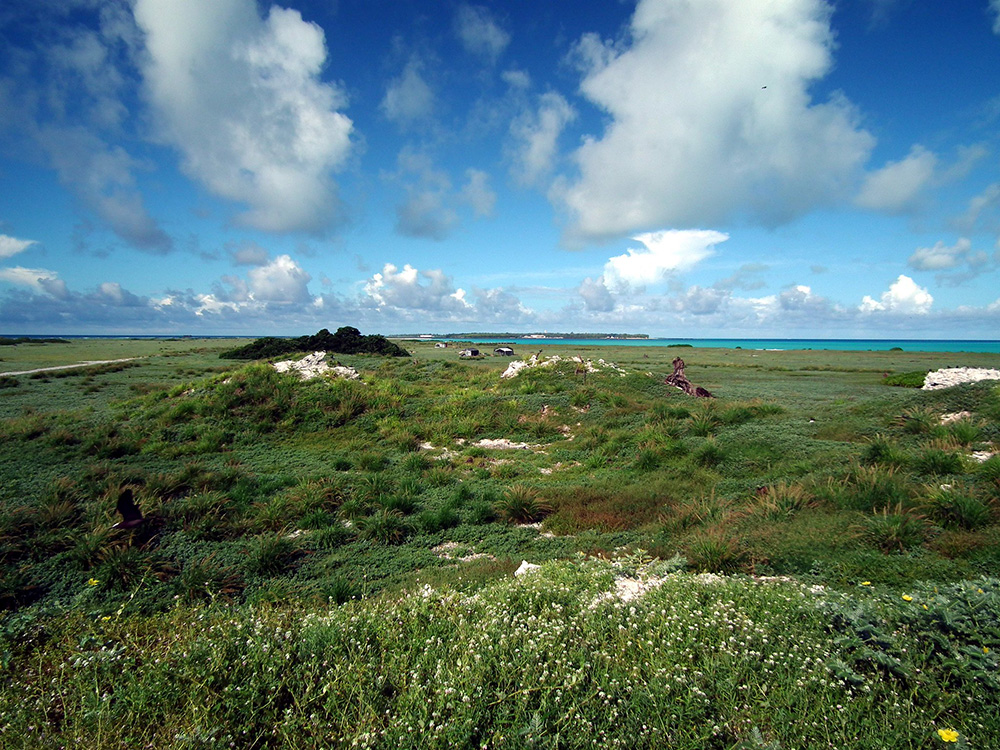 island-conservation-midway-atoll-eastern-island-native-plants