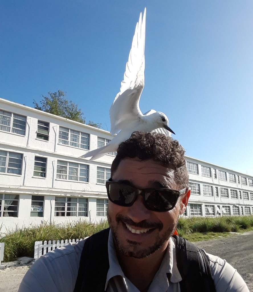 island-conservation-preventing-extinctions-invasive-species-midway-atoll-jose-luis-white-tern-seabird