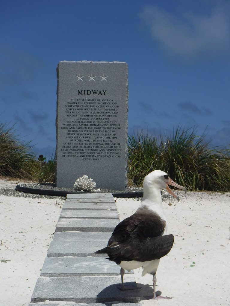 island-conservation-preventing-extinctions-invasive-species-midway-atoll-midway-national-monument-laysan-albatross-seabirds