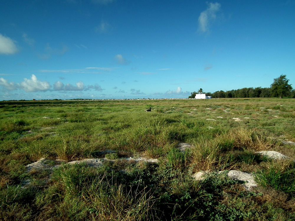 island-conservation-preventing-extinctions-midway-atoll-field-before-albatross-return