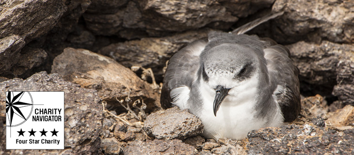 island-conservation-invasive-species-preventing-extinctions-san-ambrosio-island-charity-navigator-feat
