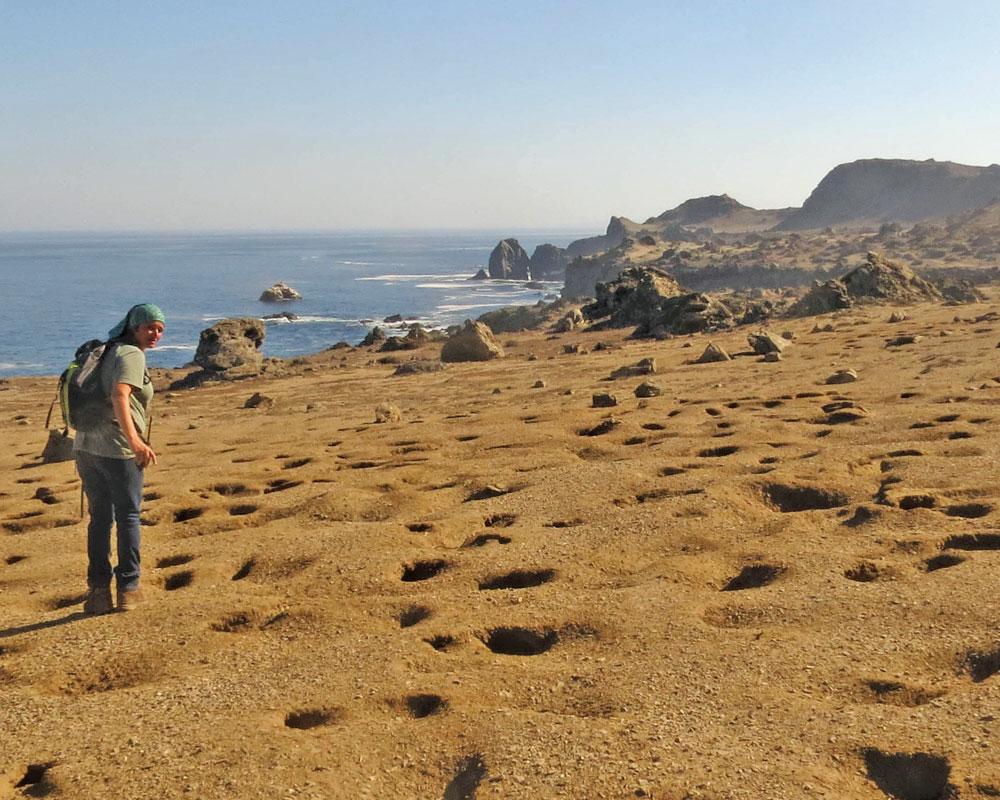 island-conservation-invasive-species-preventing-extinctions-choro-island-peruvian-diving-petrel-burrows