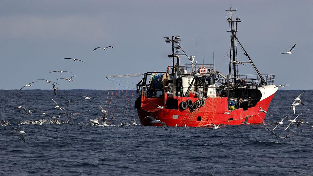 island-conservation-invasive-species-preventing-extinctions-albatross-fishing-vessel