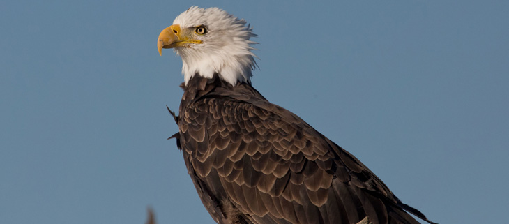 island-conservation-invasive-species-preventing-extinctions-migratory-bird-act-bald-eagle-conservation-legislation-feat