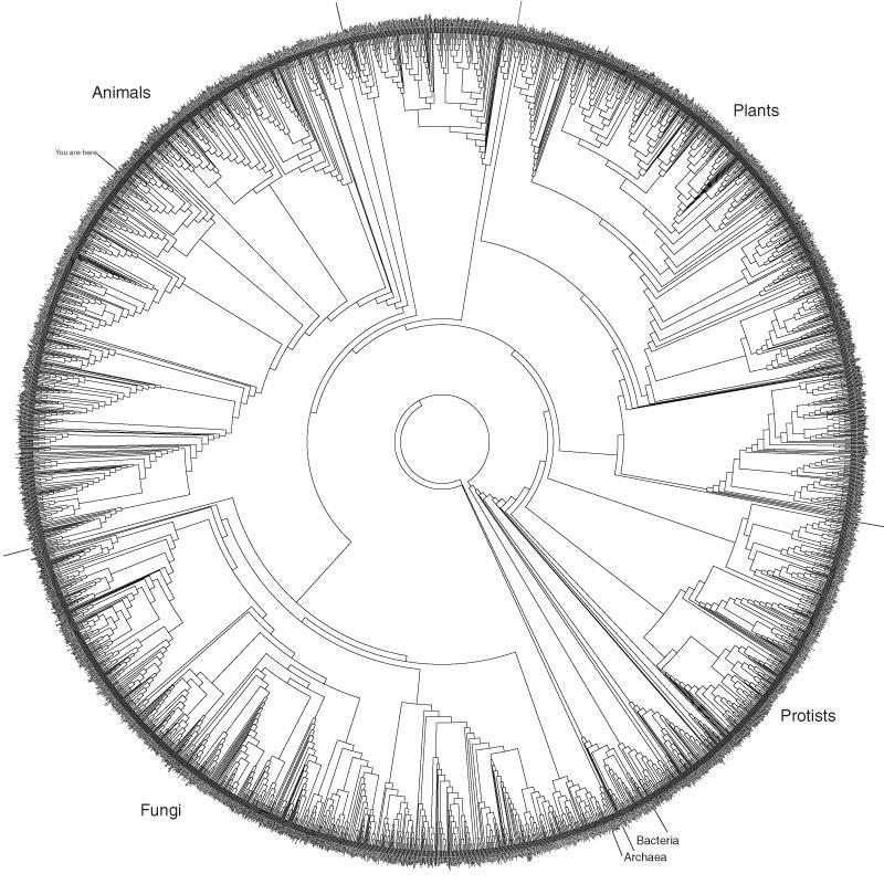island-conservation-invasive-species-preventing-extinctions-hillis-pot-tree-of-life-1
