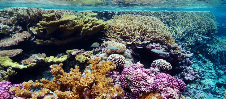 island-conservation-invasive-species-preventing-extinctions-marine-conservation-research-coral-reef-recovery-2050-feat