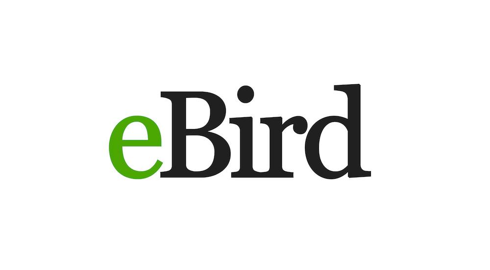 island-conservation-invasive-speices-preventing-extinctions-ebird-cornell