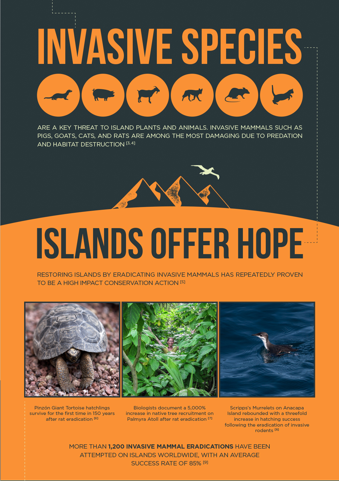 island-conservation-invasive-species-removal-hope-preventing-extinction-biodiversity-extinction-crisis