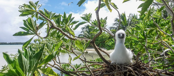 island-conservation-invasive-species-preventing-extinctions-palmyra-atoll-marine-ecosystems-seabird-connection-feat-2