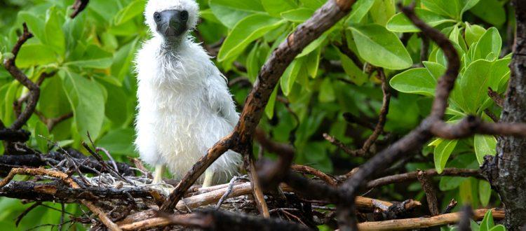 island-conservation-invasive-species-preventing-extinctions-tetiaroa-atoll-seabird-birds-to-reef-campaign